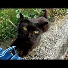 漁港で出会った黒猫をナデナデしたら懐いて付いてくるようになった