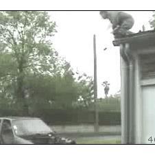 Jump-into-car-windshield