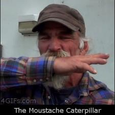 Moustache-caterpillar