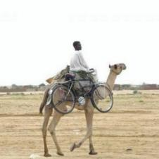 자전거 타기보다 낙타 타기가 편해