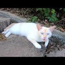 最初は警戒していたけどナデナデすると喜んで懐いてきた白猫