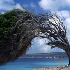 넘어지지 않는 나무