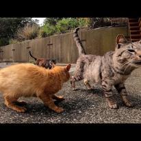 団地前バス停に野良猫が集まっていたので行ってみた