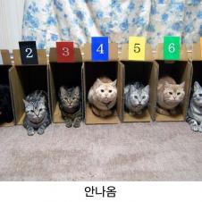 고양이 경주가 없는 이유