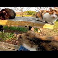 公園のテーブルに猫が集まっていたのでナデナデしてきた