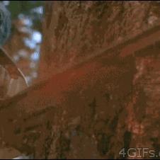 Grumpy-cat-stops-logger-chainsaw
