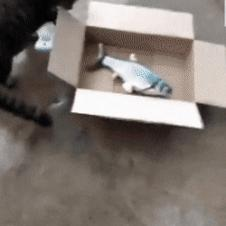 냥이에게 생선을 맡긴 결과.gif