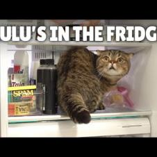 LuLu Knows How to Open the Fridge!