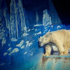 한번도 얼음위를 걸어 보지 못한 마음 아픈 북극곰