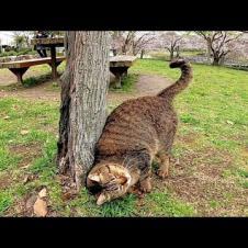 公園で出会ったキジトラ猫、ナデナデするとゴロンゴロン転がって喜んだ