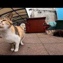 漁港で行われる猫の集会に参加してきた