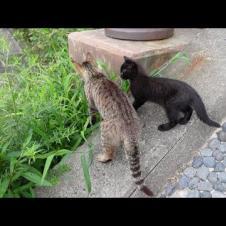 母猫の後について階段を必死に上る子猫の黒猫が超カワイイ
