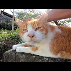 塀の上によく喋る野良猫がいたので近づいてナデナデしてきた