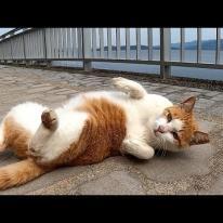 近づくと突然受け身の練習をする野良猫