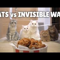 Cats vs Invisible Wall (ft. Chicken)