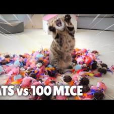 Cats vs 100 Mice