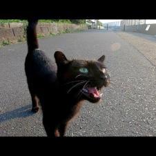 海沿いの道で黒猫が何か話し掛けてきた