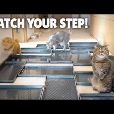 Water Minefield Challenge! Watch Your Step! | Kittisaurus