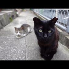 路地裏を歩く野良猫に付いていってみた