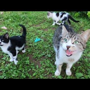 엄마 고양이와 새끼 고양이는 음식에 대한 야옹