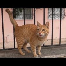 믿을 수 없을 정도로 귀여워하는 생강 고양이