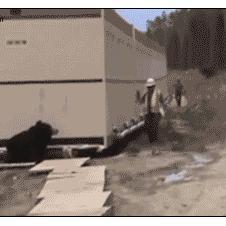 Bear-costume-coworker-prank