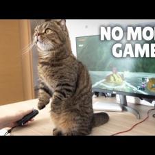 LuLu Won't Let Me Play Games!   Kittisaurus