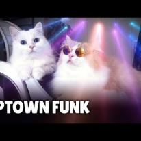 Mark Ronson - Uptown Funk (Cover By Cats) ft. Bruno Mars