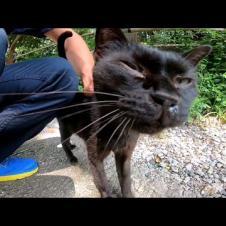 黒猫が寝ていたのでナデナデしたら足元にスリスリしてきた