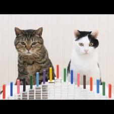 고양이와 탁구 트릭 샷