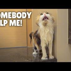 ChuChu Ran Away During a Bath! | Kittisaurus
