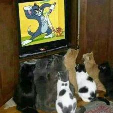 고양이들에게 최고 인기 프로인 톰과제리