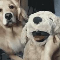 질투하는 강아지