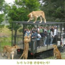 사자들의 관광